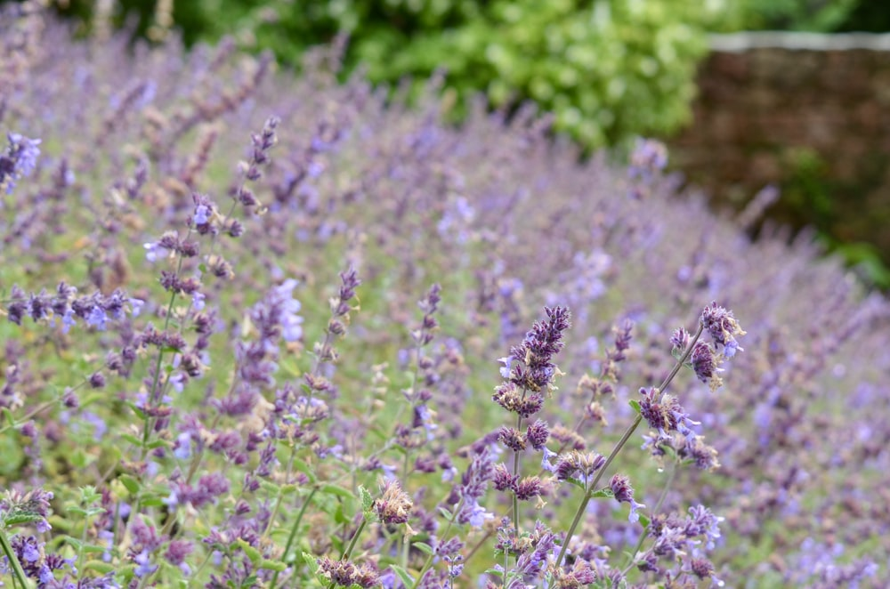purple flowers in tilt shift lens