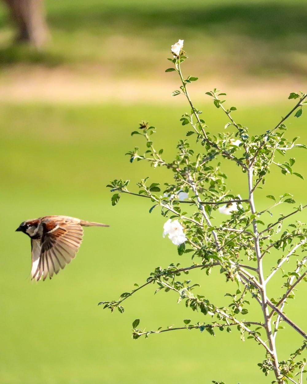 brown and black bird on white flower during daytime