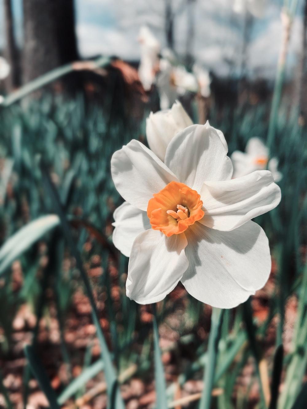 white and orange flower in tilt shift lens