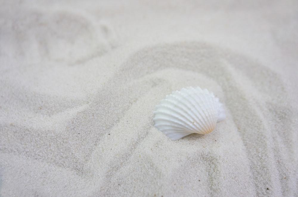 white seashell on white sand