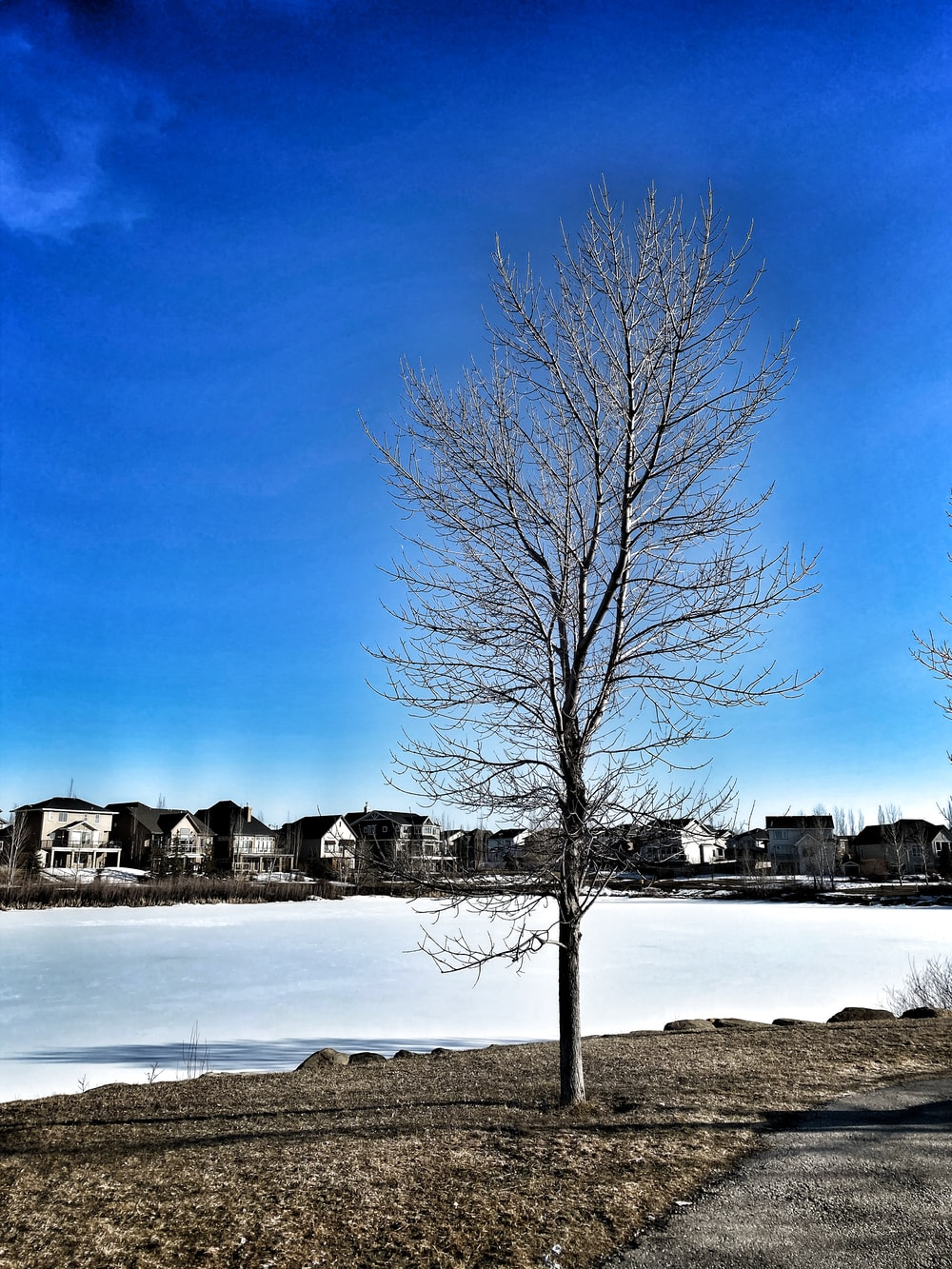 leafless tree on snow covered ground during daytime