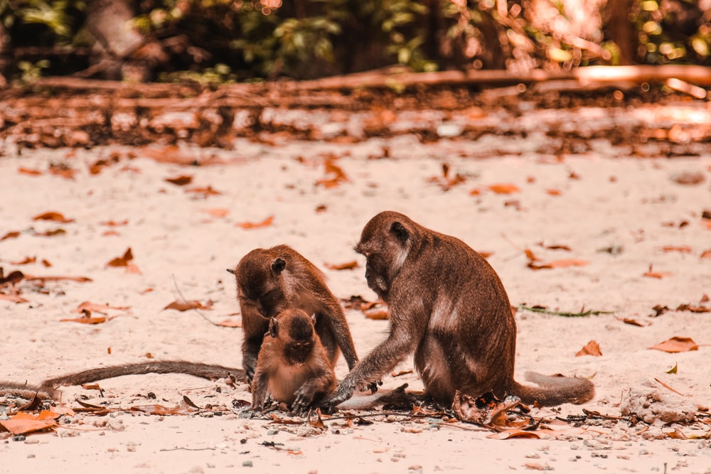 Monkey Beach Pictures Free
