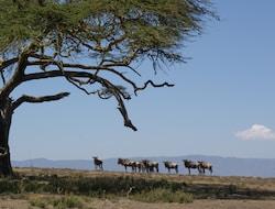 Fahrt zum Naivasha-See