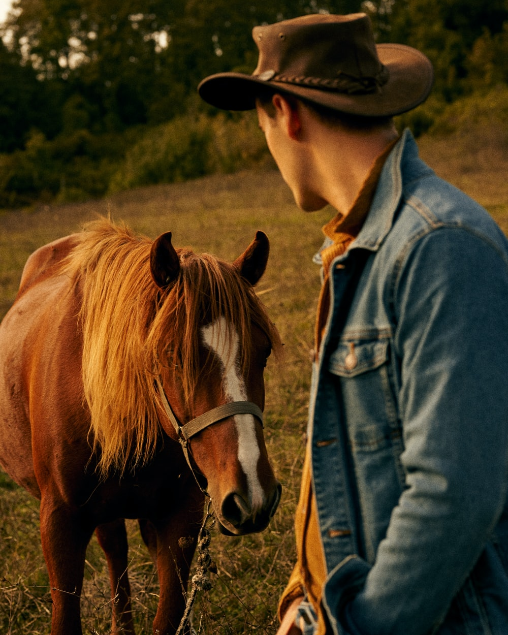 woman in blue denim jacket and brown cowboy hat standing beside brown horse during daytime
