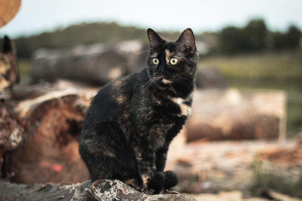 black and brown cat on gray rock during daytime