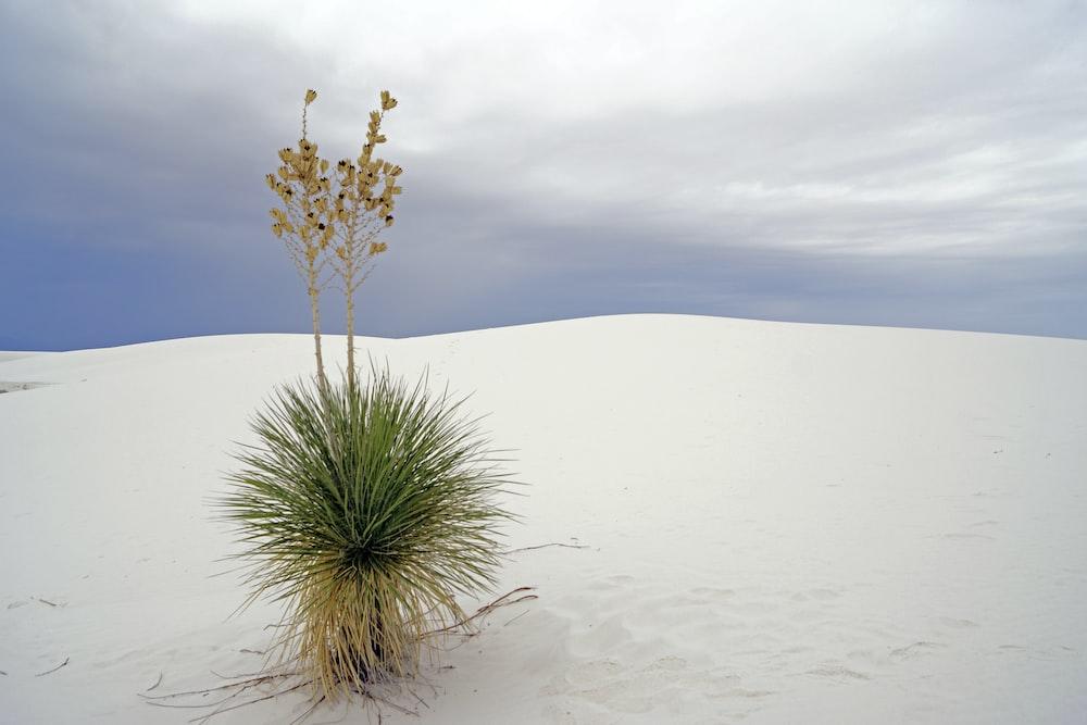 green plant on white sand during daytime