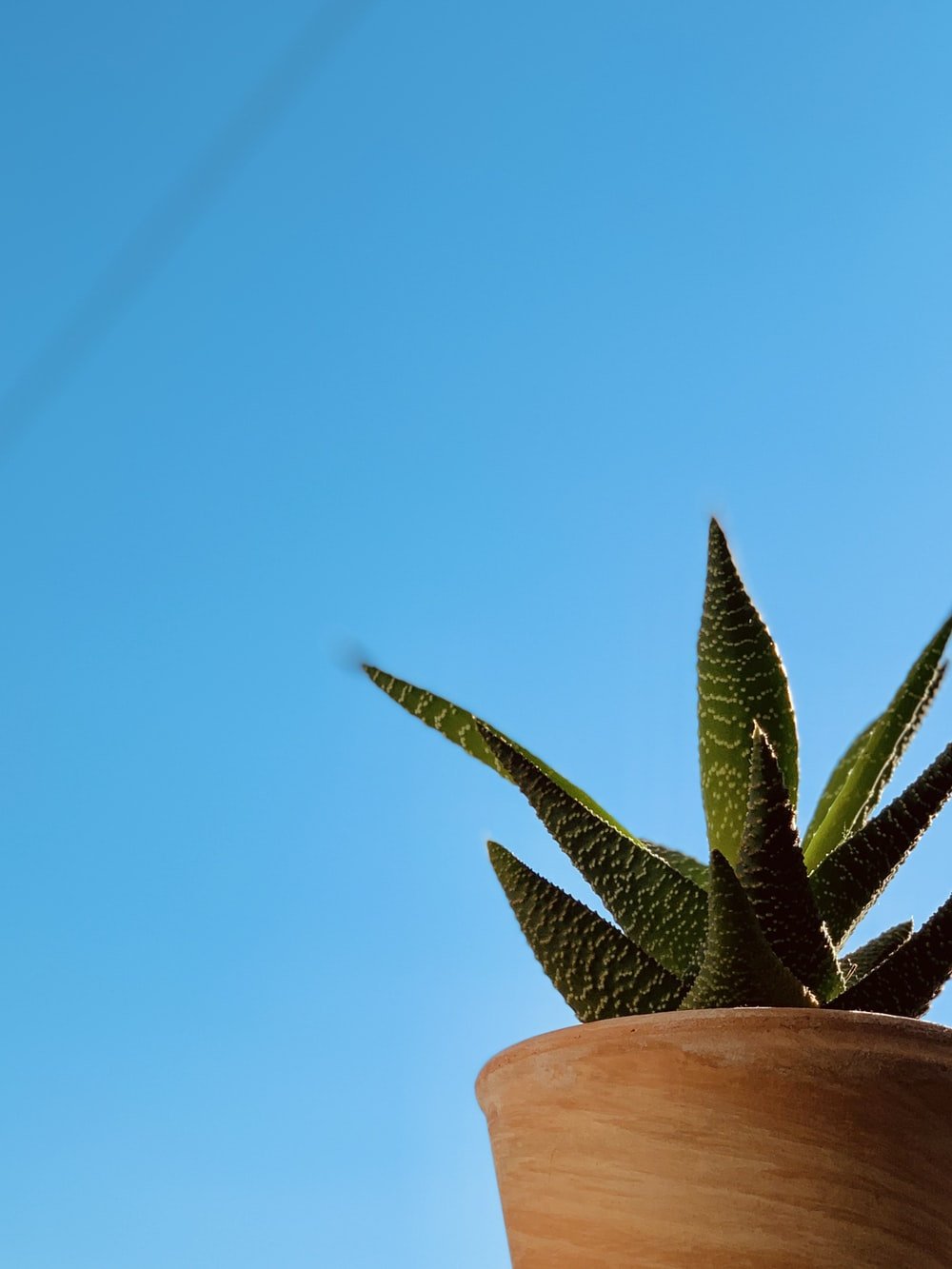 green and brown plant under blue sky during daytime
