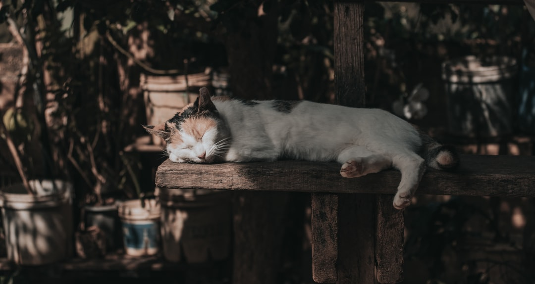 ¿Pueden las piedras en la vejiga matar a un gato?
