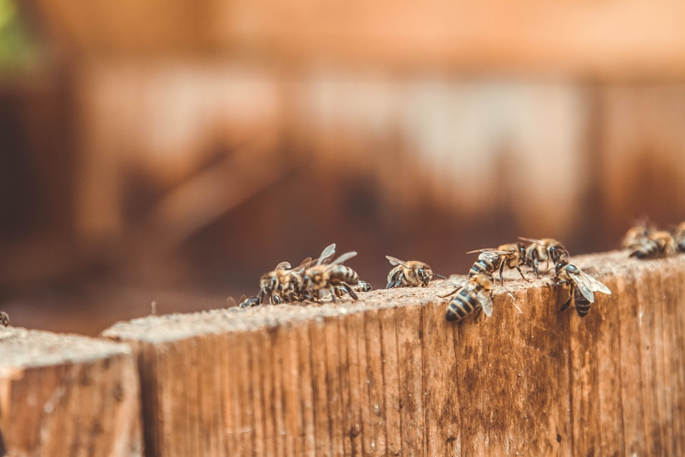 black and yellow bee on brown wooden surface in close up photography during daytime