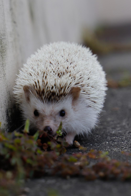 white hedgehog on black concrete floor