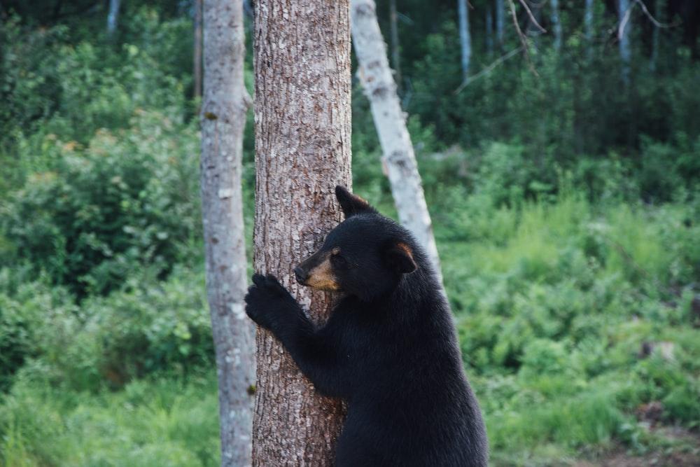 Black Bear Pictures Download Free Images On Unsplash