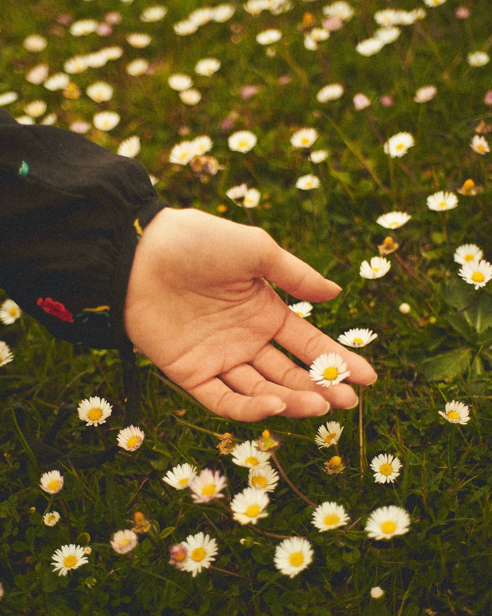 person holding white and yellow flower
