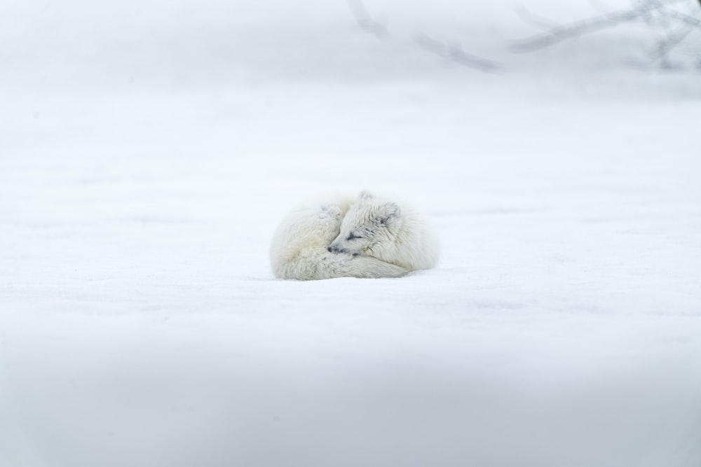 white long coated animal on snow covered ground