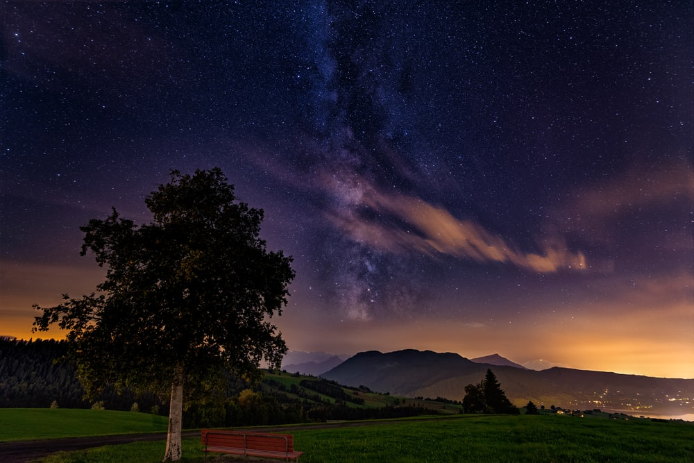 green trees and grass field under blue sky with stars during night time