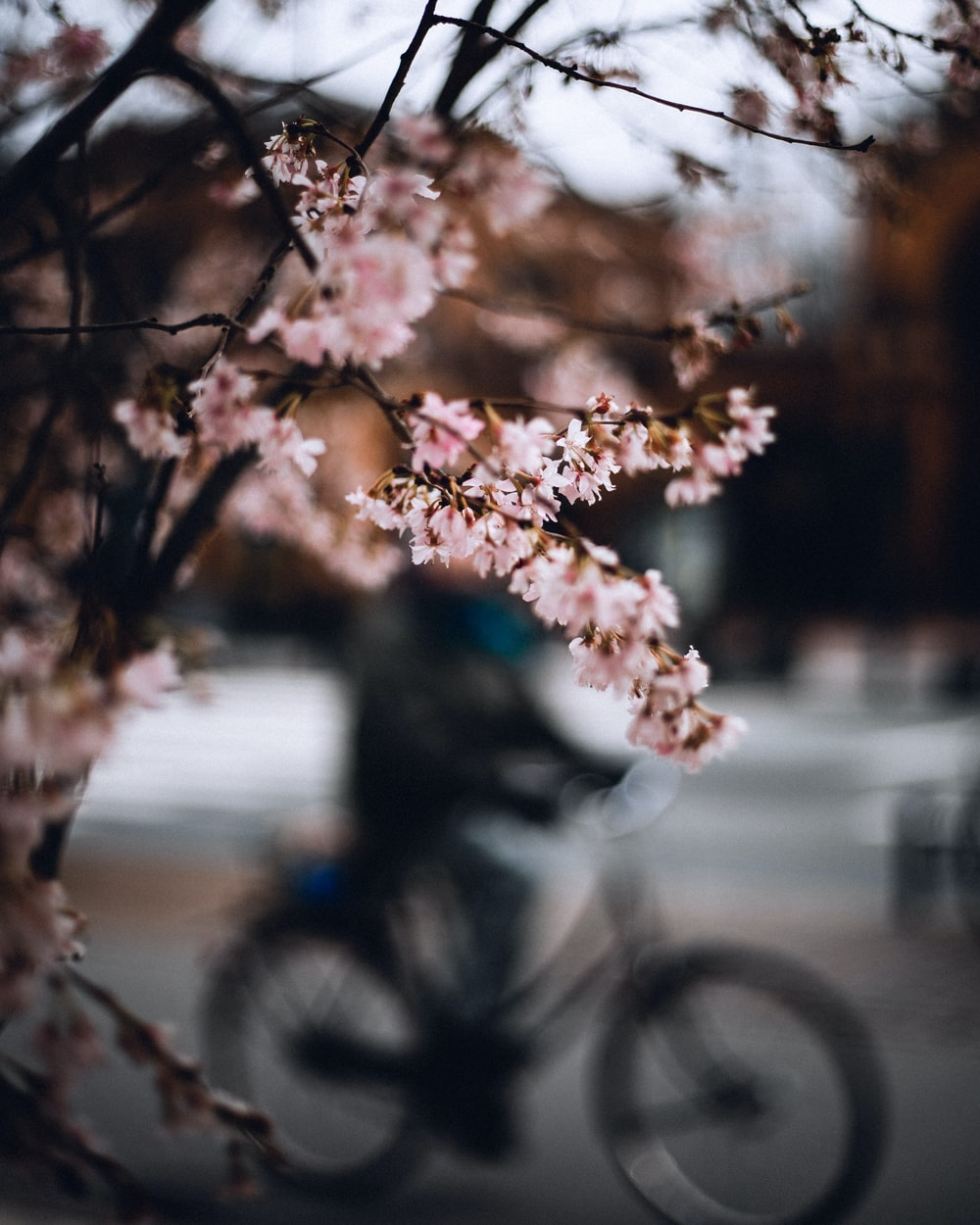 black bicycle parked beside brown tree during daytime