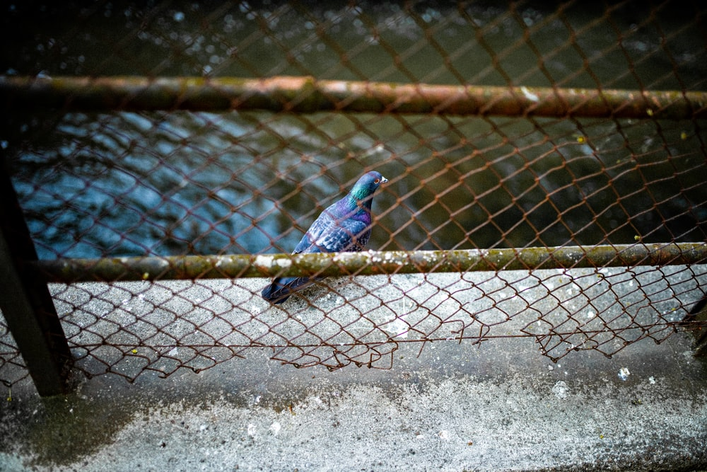 blue bird on gray metal fence during daytime