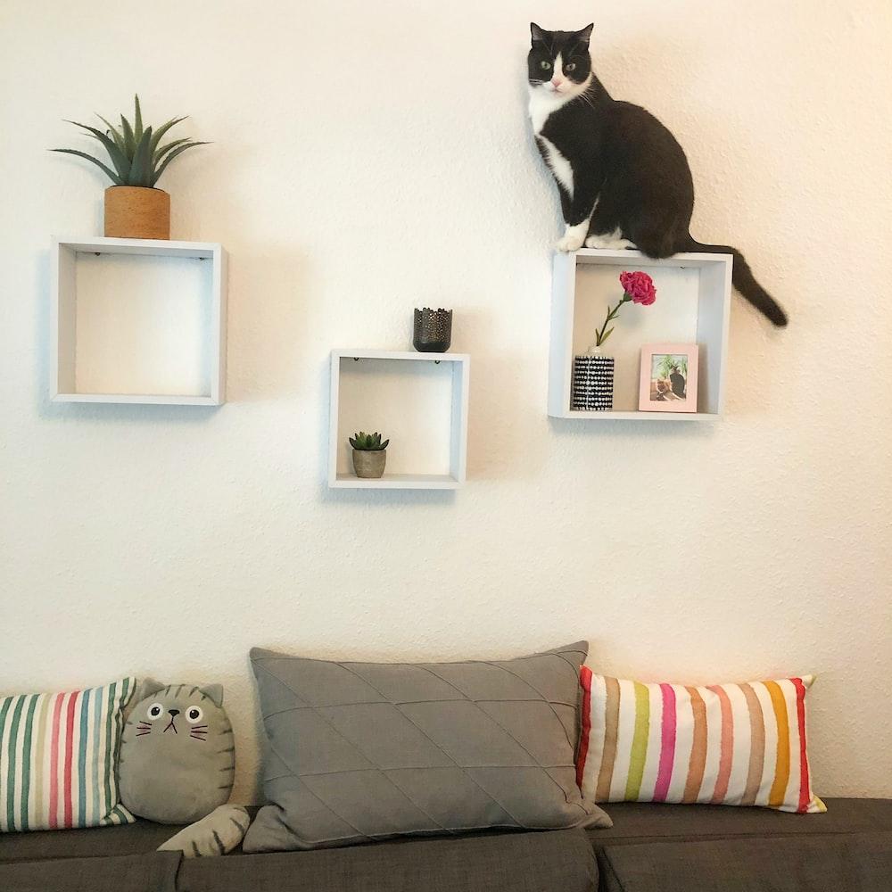 tuxedo cat on white wall mounted shelf