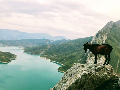 brown horse on gray rocky mountain during daytime albania zoom background