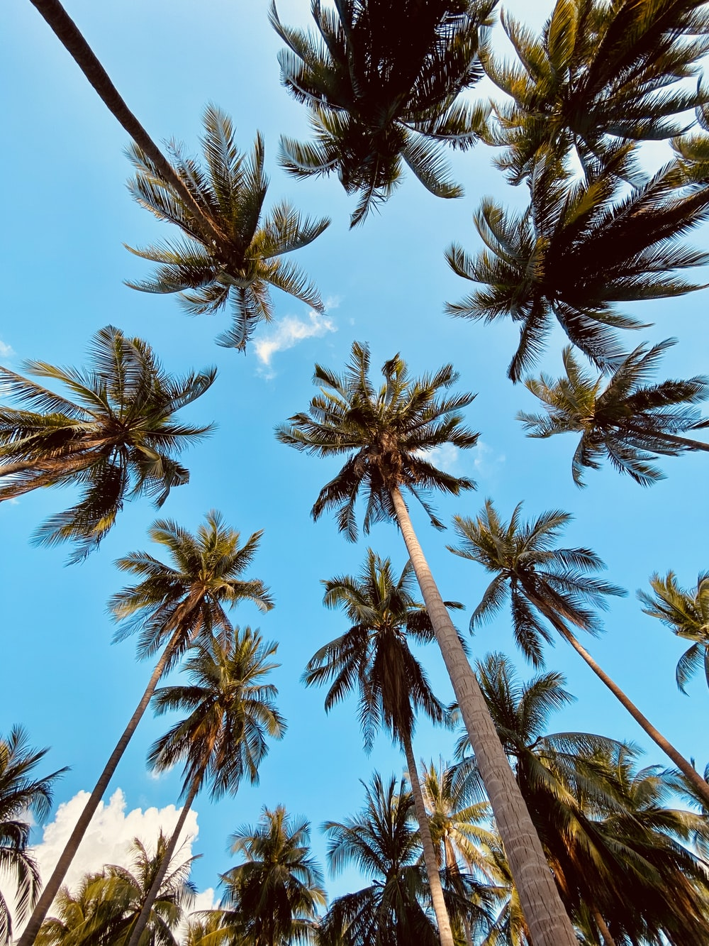low angle photography of palm trees under blue sky during daytime