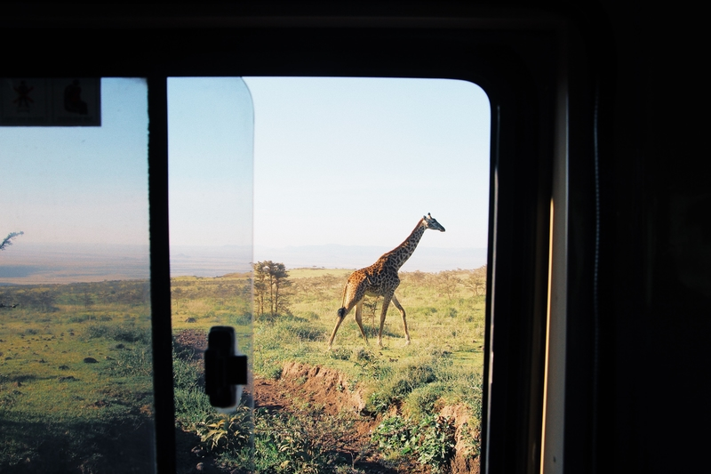 Wild safari in Africa