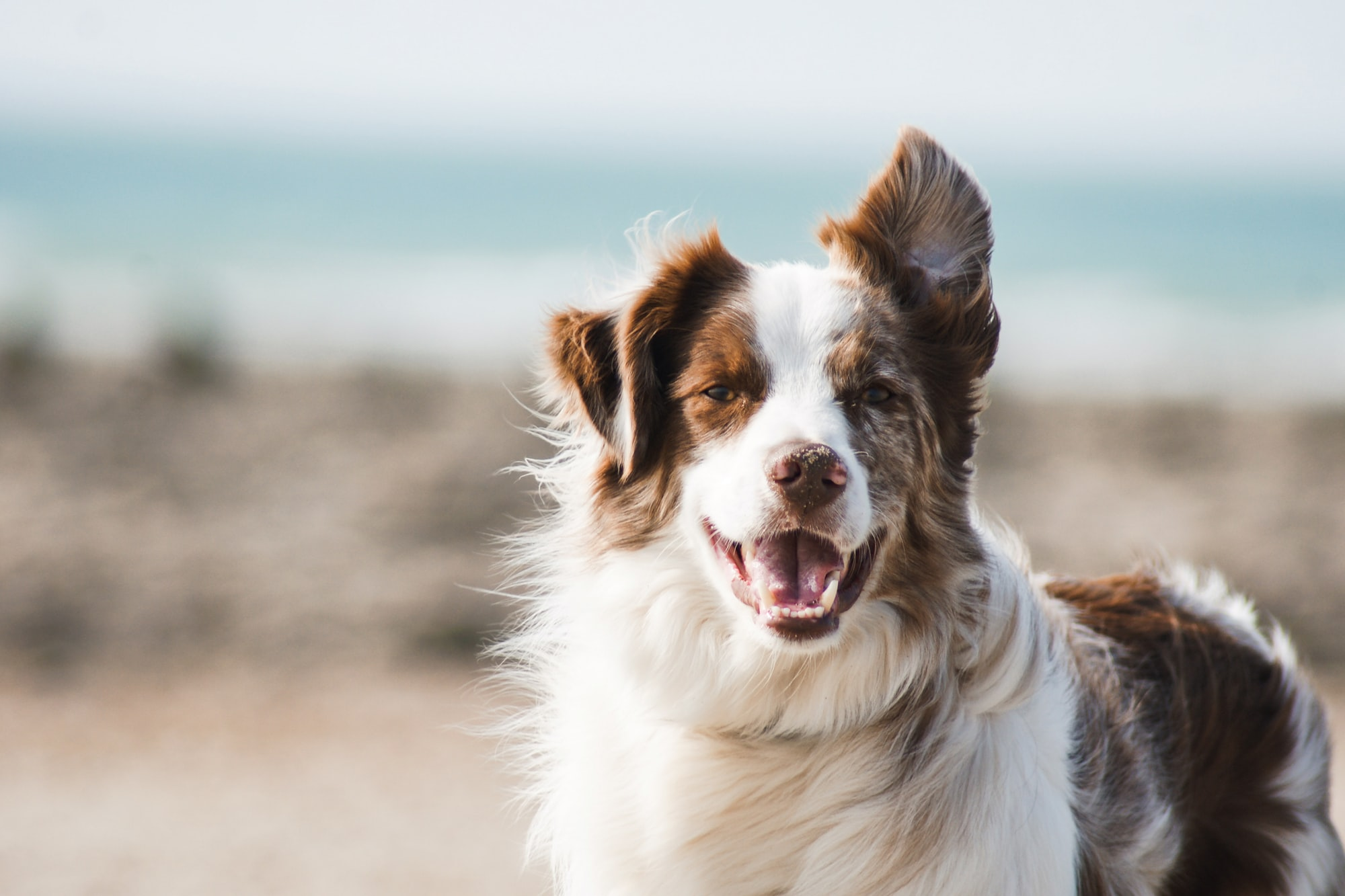 These 6 homely dogs are underrated