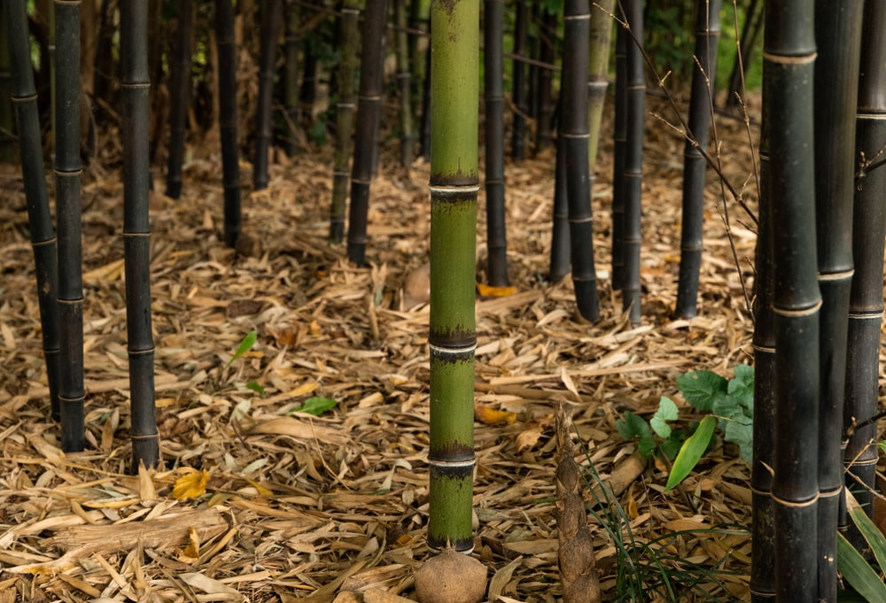 green bamboo stick on brown dried leaves
