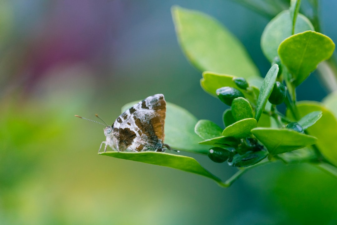 Butterfly resting on a jasmine leaf