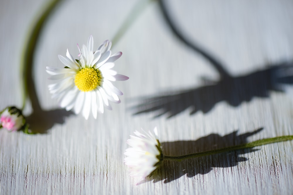 white and yellow flower on brown wooden surface
