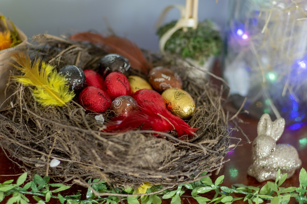 red and yellow bird on nest