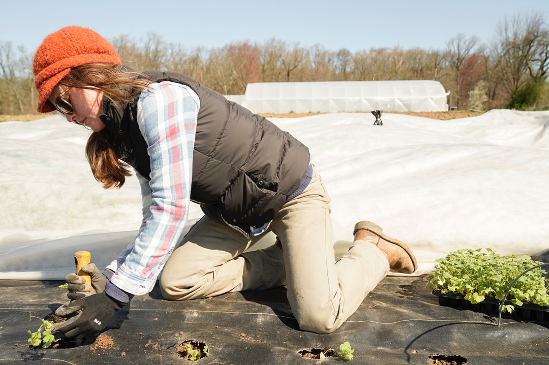 Planting delphinium into landscaping fabric on a chilly, early spring day at Pasture Song Farm in Pottstown, PA  zoeschaeffer.com instagram.com/dirtjoy pasturesongfarm.com