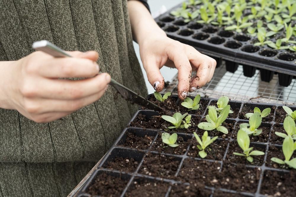 person holding green plant on black plastic pot
