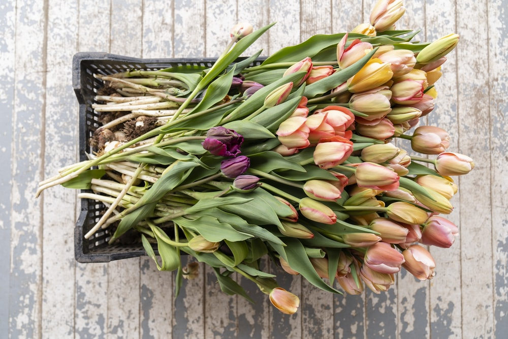 pink tulips on brown wooden crate