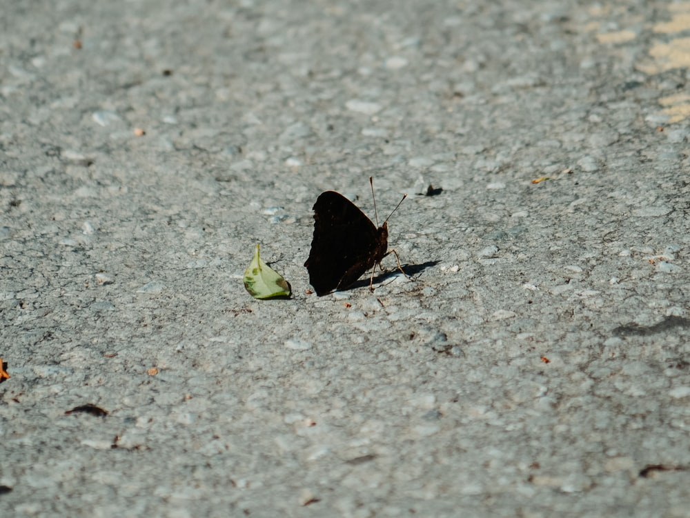 black butterfly on gray concrete floor