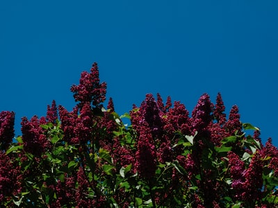 green and red plant under blue sky during daytime