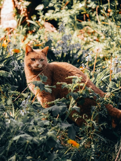 orange tabby cat on green grass during daytime