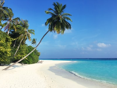green palm tree on white sand beach during daytime maldives zoom background