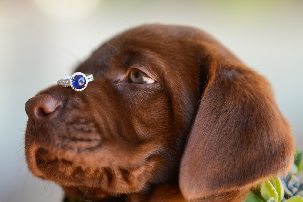 brown short coated dog with blue and white beaded bracelet