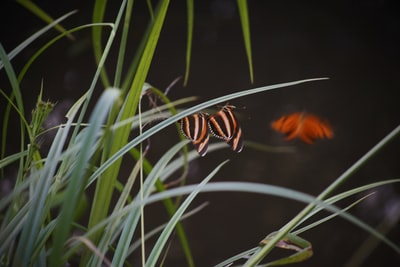 orange and black butterfly on green grass invertebrate teams background