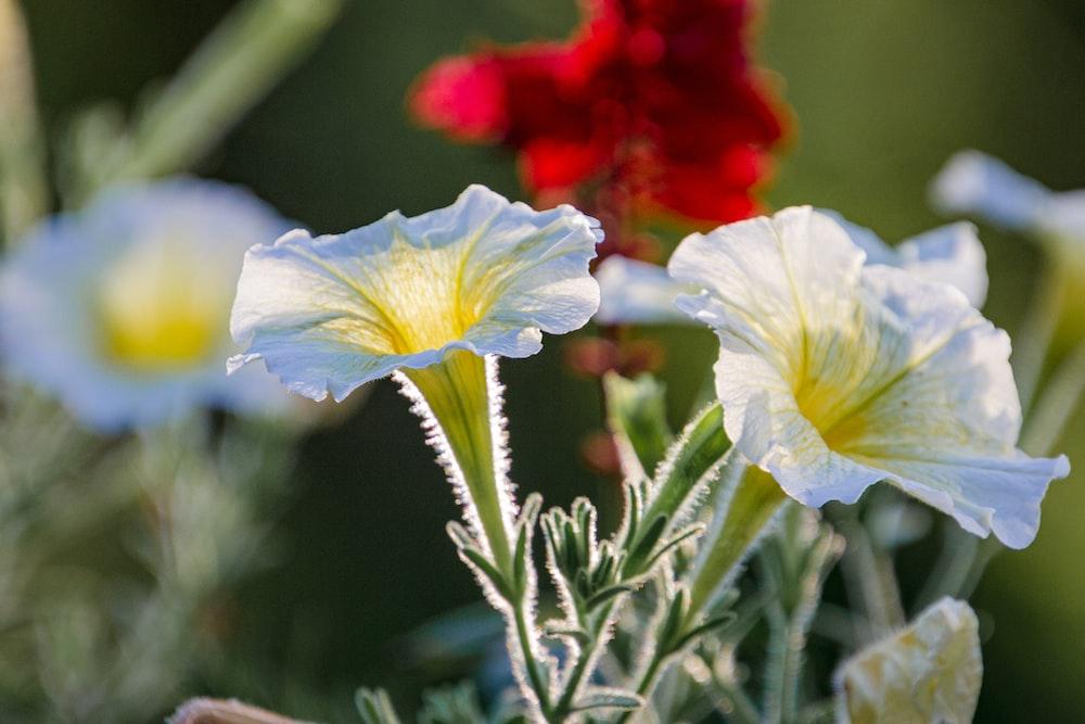 white and blue flower in tilt shift lens