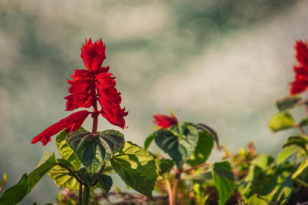 red flower in tilt shift lens