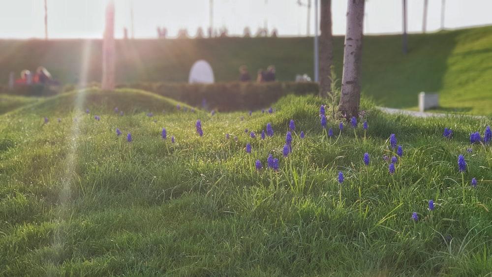 blue flower on green grass field during daytime