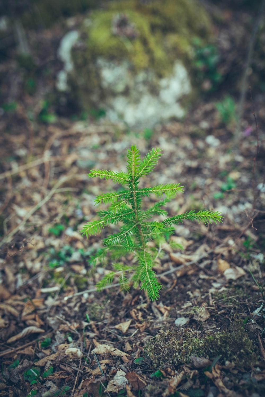 green fern plant on brown soil