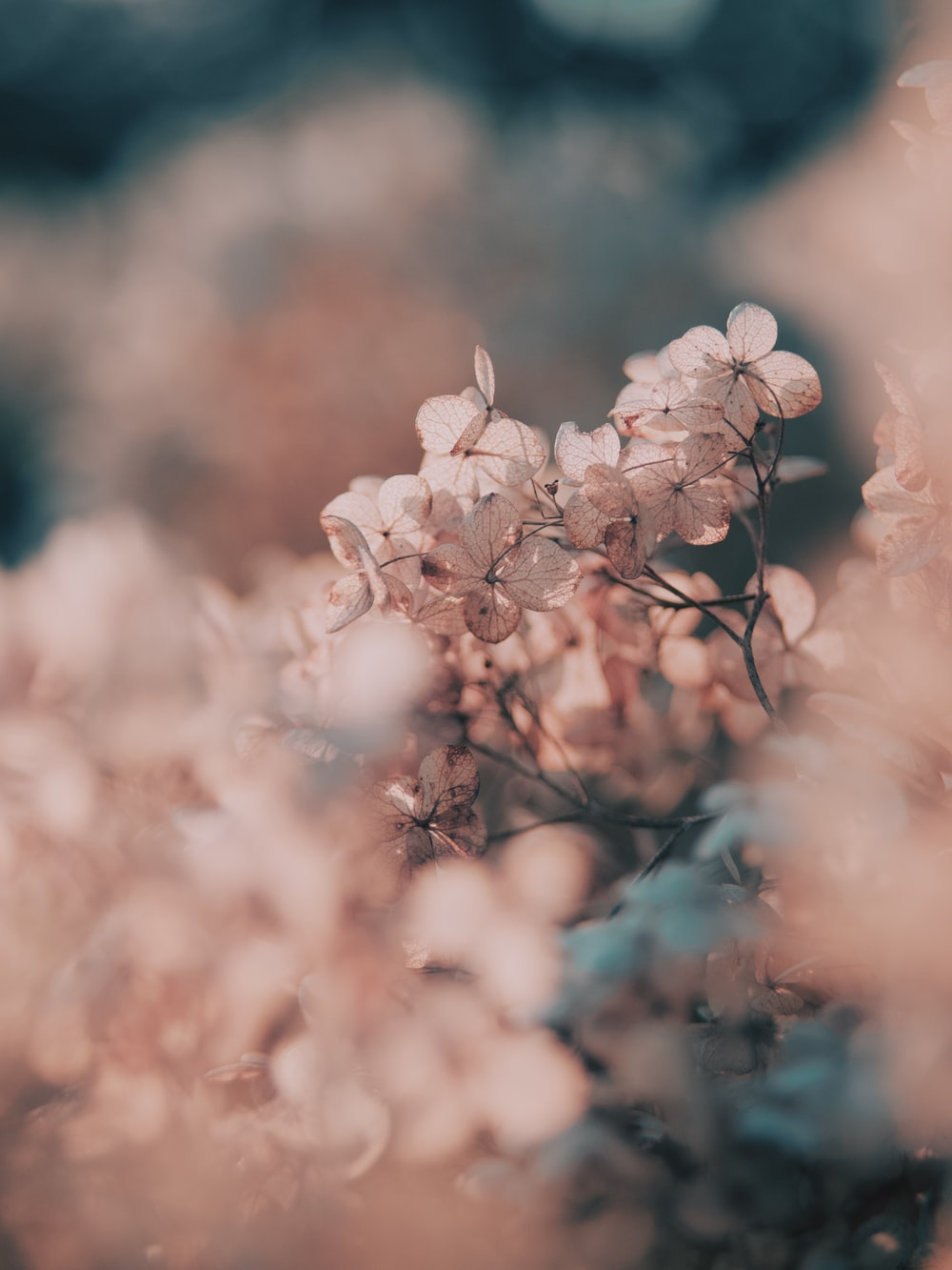 white cherry blossom in close up photography