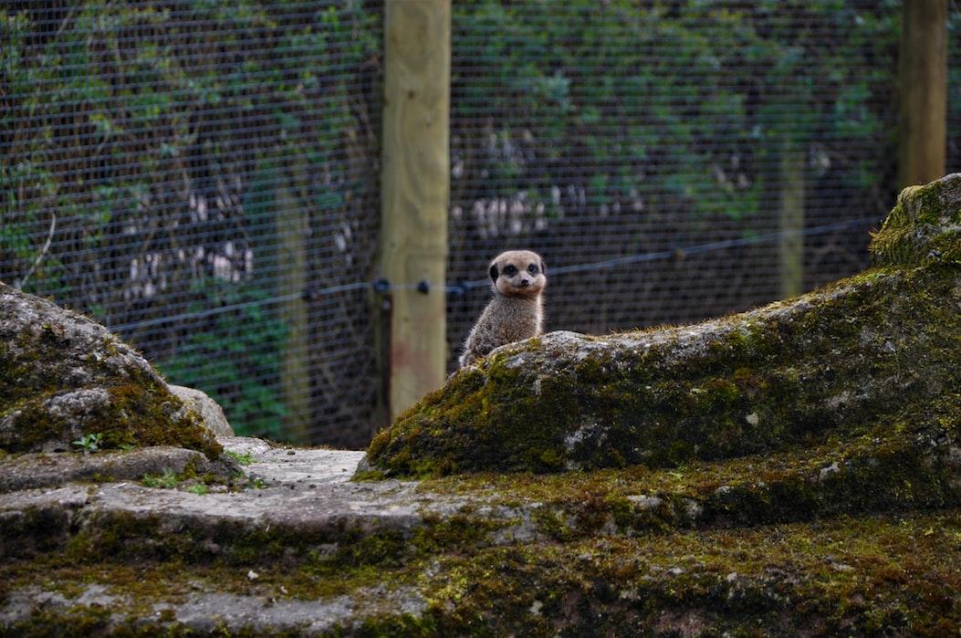 Zoos in Kerala