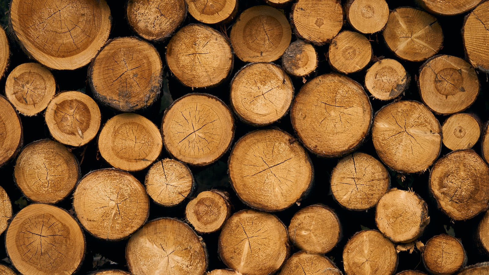 """Sony a6000 sample photo. """"Pile of brown wood"""" photography"""