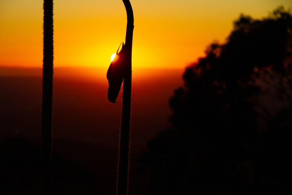silhouette of a person holding a rope during sunset