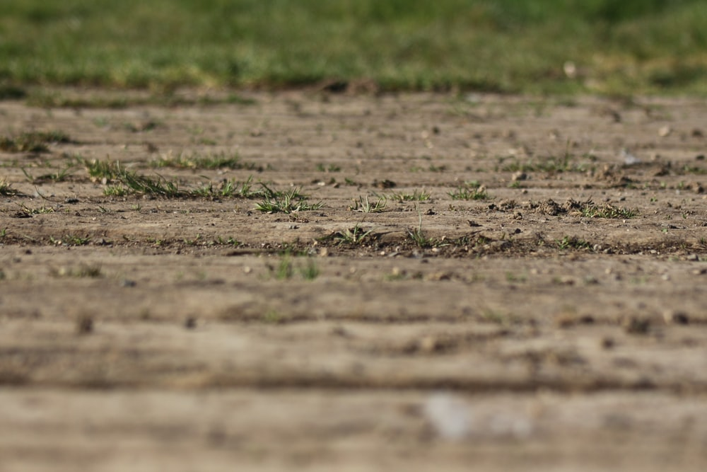 brown soil with green grass