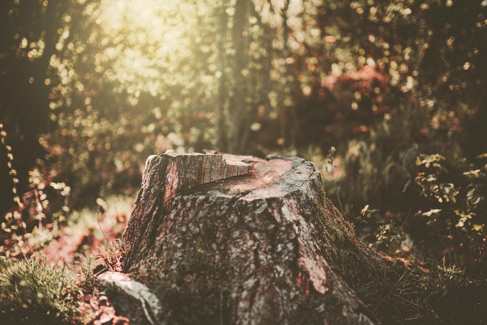 brown log in tilt shift lens