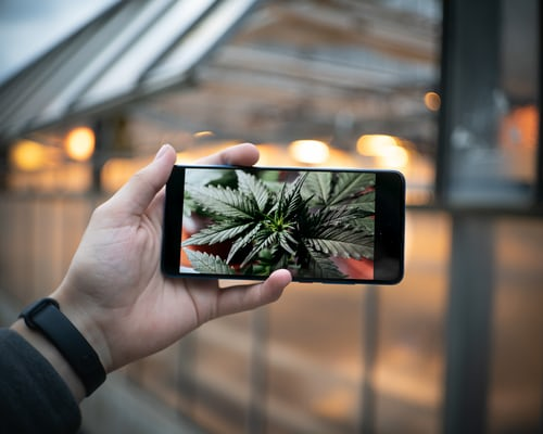 4 Ways Technology is Shaping Cannabis Growing Process 4