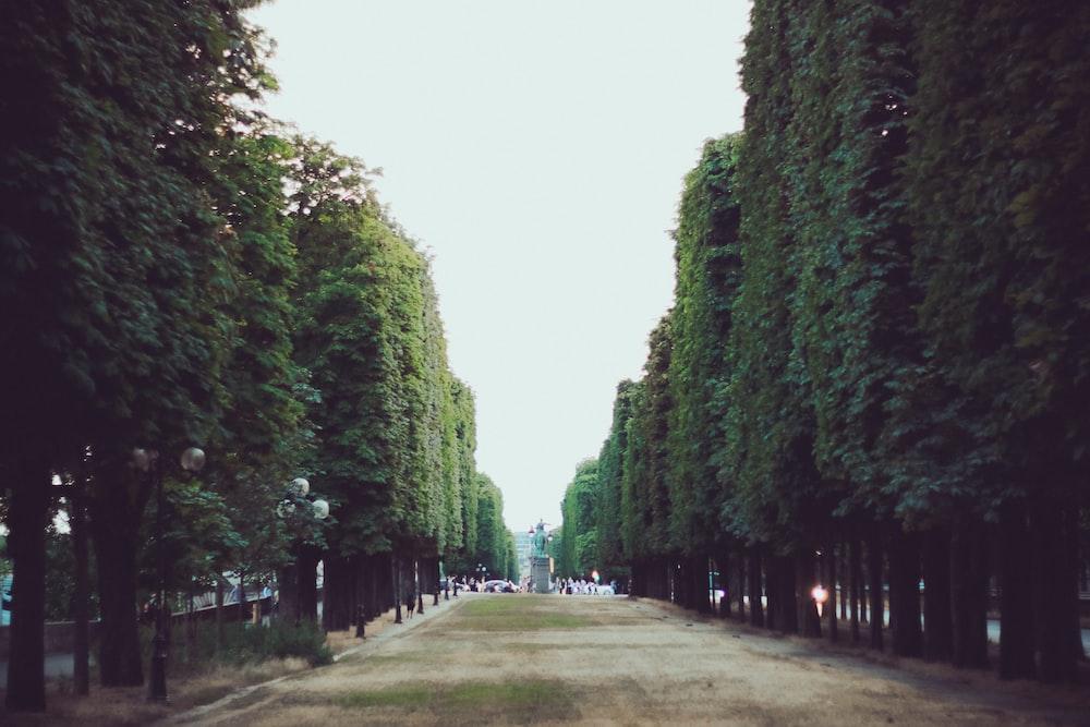 gray concrete pathway between green trees
